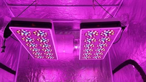S540 Advanced Spectrum Max Led grow light×2